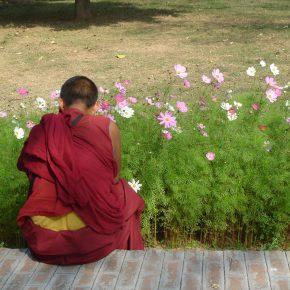 毎月10日はチベットの平和を祈念する日「一食 for チベット」